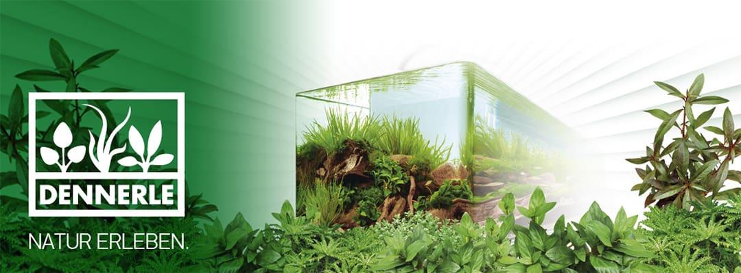 dennerle nano cube aquarium mini aquarien