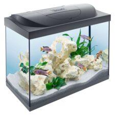 starter line 80l aquarium tetra 1