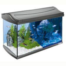tetra aquaart led aquarium 60l