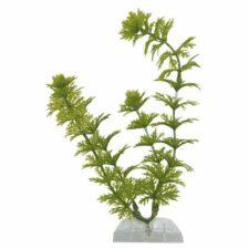 tetra plantastics ambulia 36